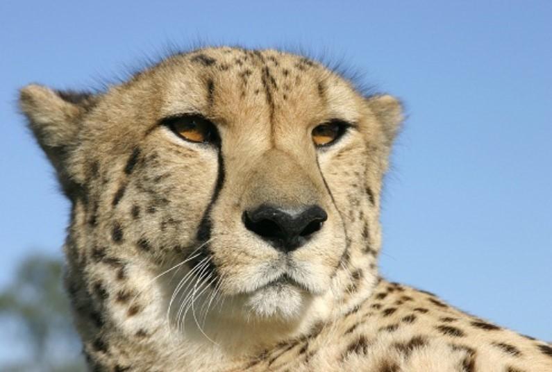 Late Deal, Luxury Lodge & Safari, Save £230 Per Person