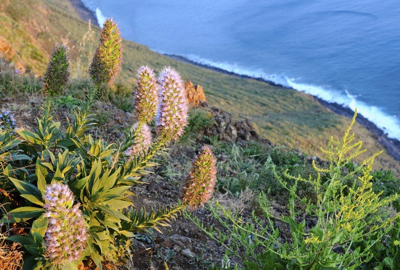 4* Madeira, Portugal, B&B