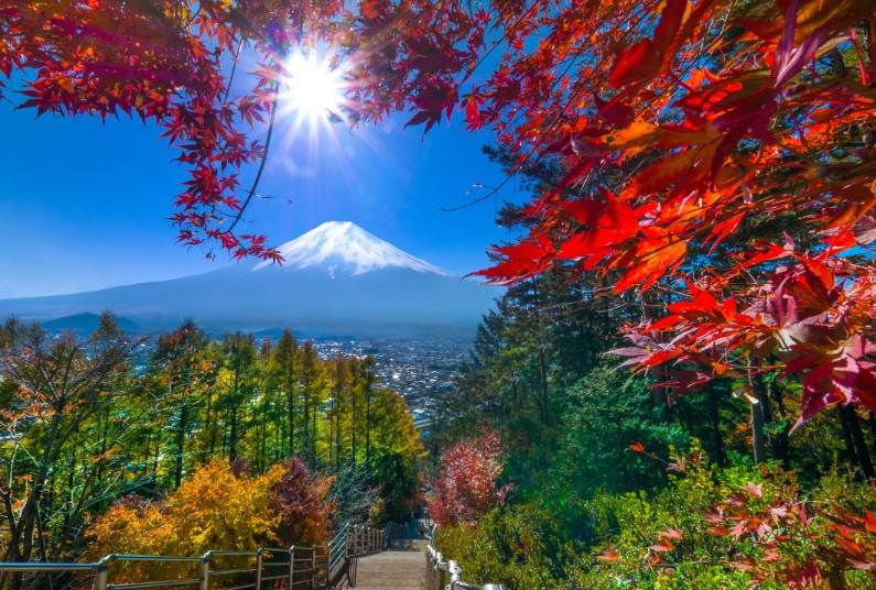 Samurai Castles and the Bullet Train, Save Up To £400 PP
