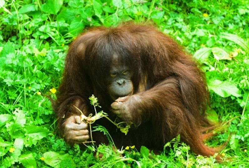 Explore Borneo, Saving Up To £210 Per Person
