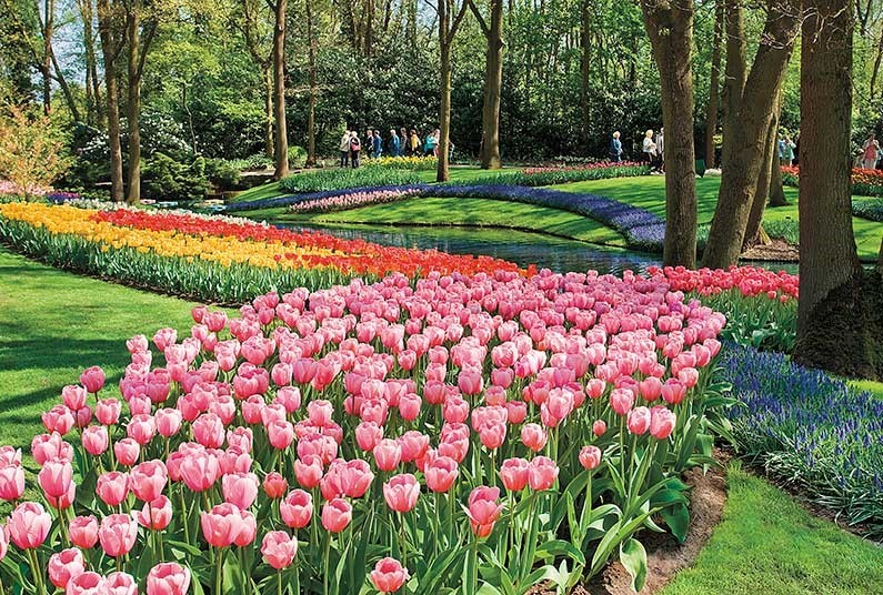 Visit the famous tulip and bulb fields of the Netherlands