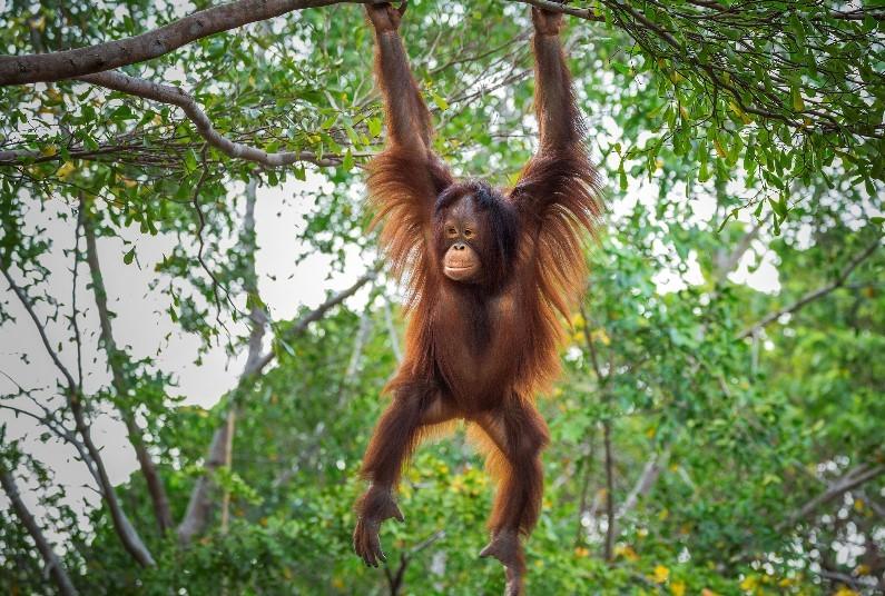 Best of Borneo