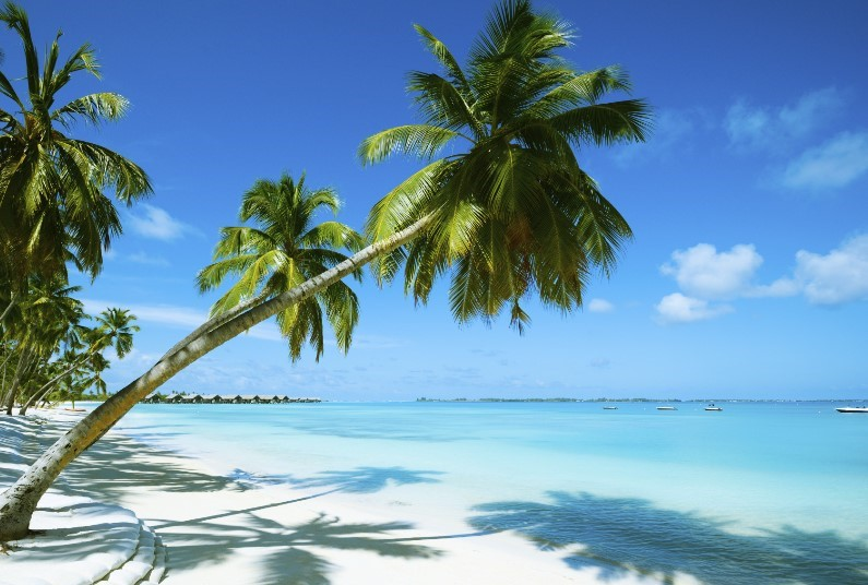 FREE Half Board Upgrade + Save Up To £1,255 Per Couple!