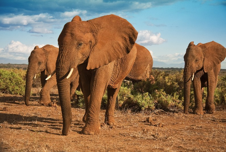 Short Safari Experience, Saving Of £1,210