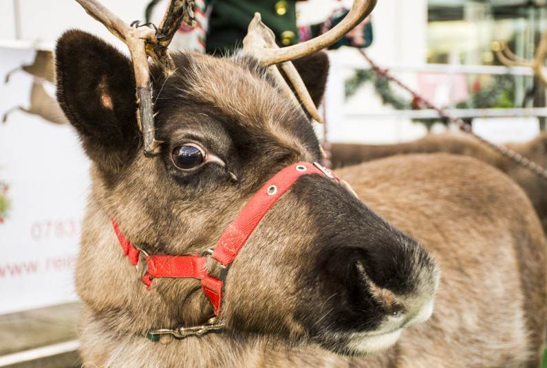 Day Trip To See Santa, Book Now For 2018!