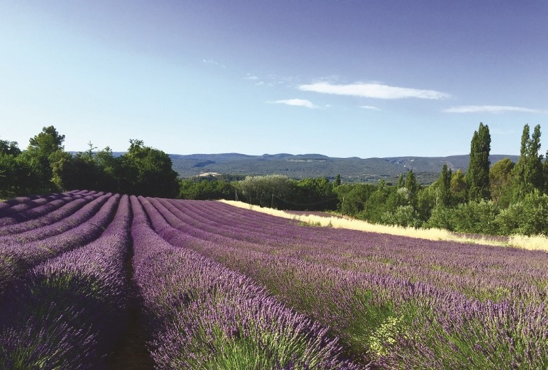 Cycling tour of Provence