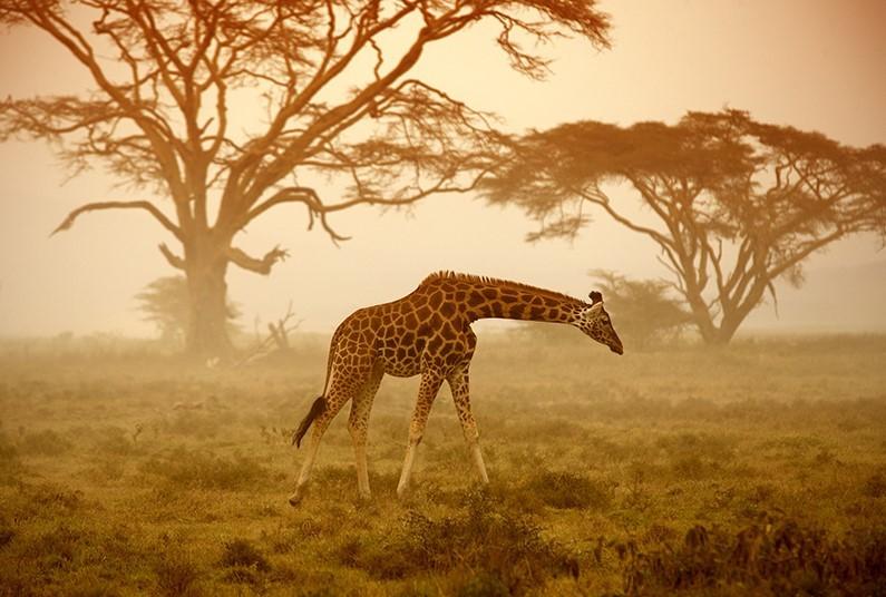 Incredible Kenya safari