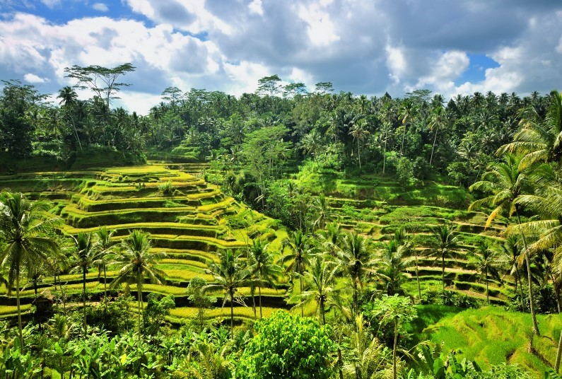 10 Nights Bali Twin Centre, Save Up To £1780 Per Couple