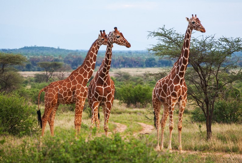 Amazing Self Drive Tour, With 7 Day's Car Hire Included
