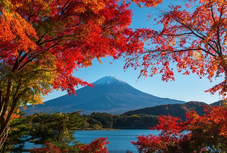 Visit Japan In The Autumn
