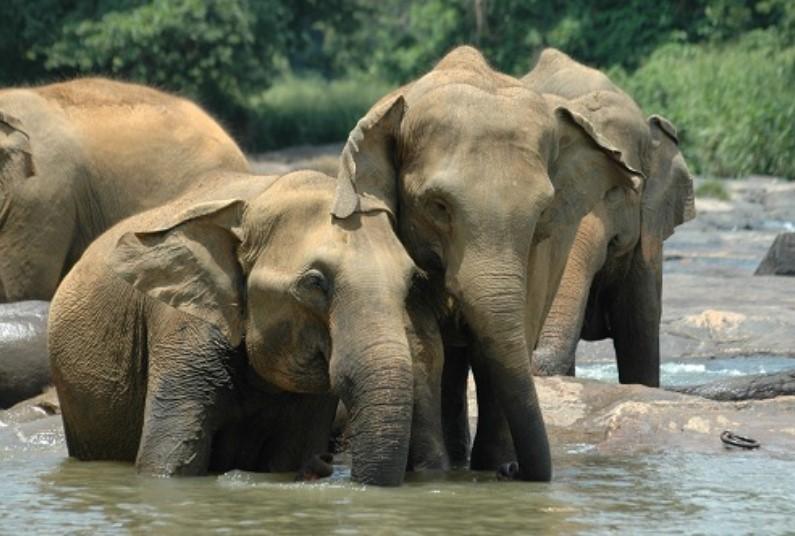 Spoli Yourself... With A Wildlife Tour of Sri Lanka
