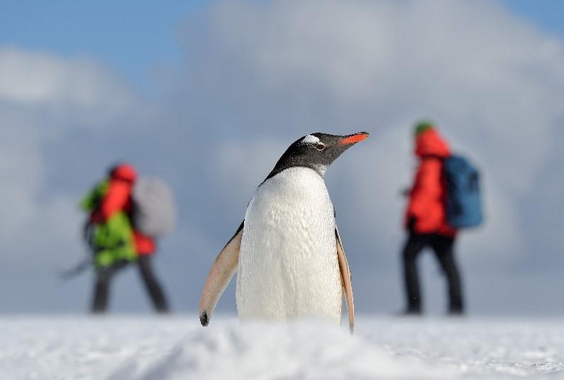 Antarctica - Exploring the Frozen Continent