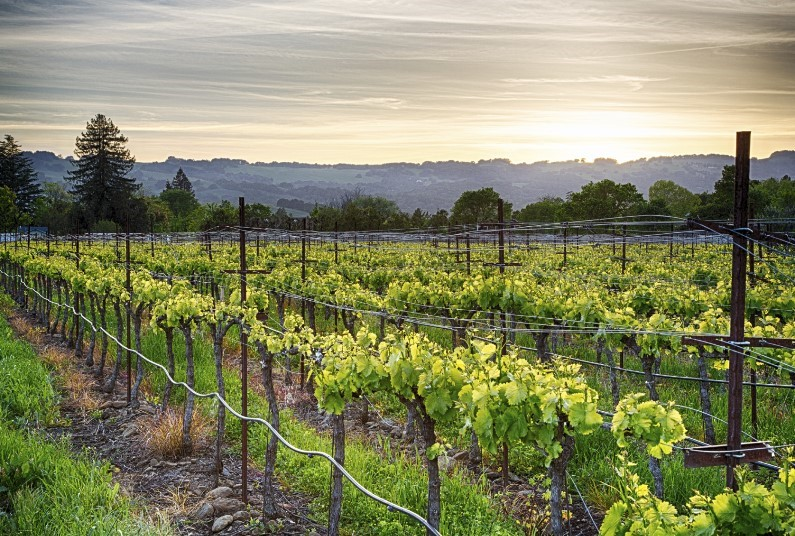 Explore The World Famous Californian Vineyards