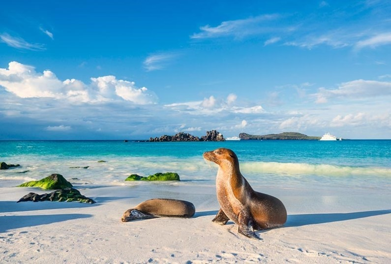 Up To 30% Off Galapagos Adventure Cruising