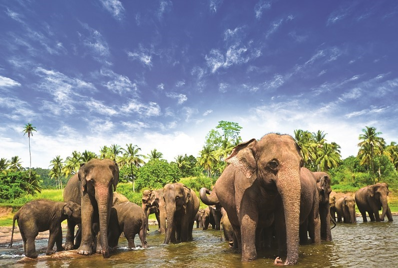 SAVE on this tour of Sri Lanka