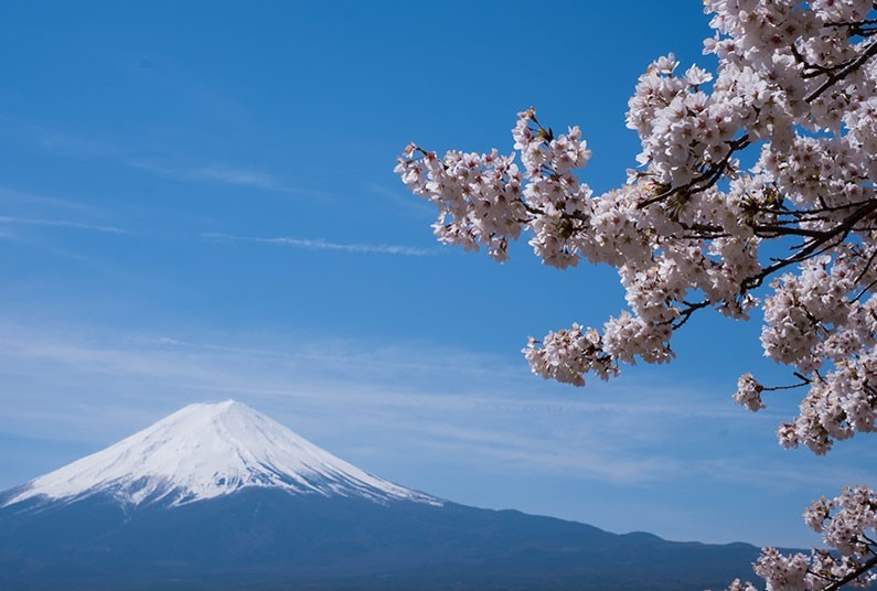 16 night escorted tour in Japan