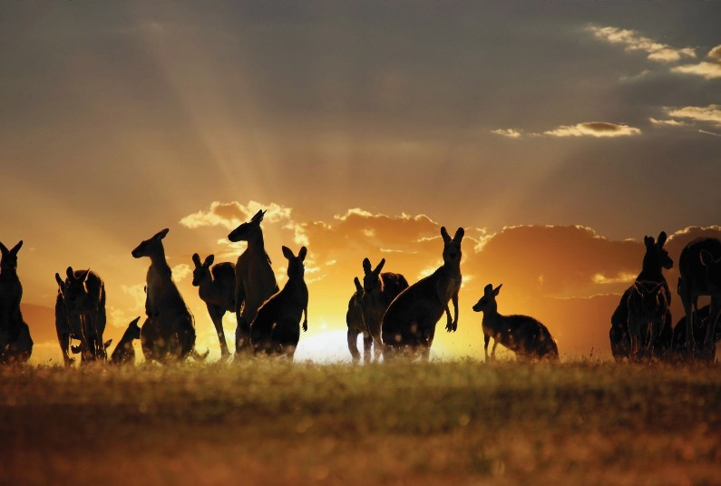 11 night tour of Australia