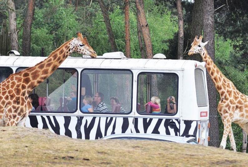 Safari Tent holiday in a Safari park
