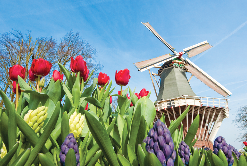 6 Nights Tulips and Windmills