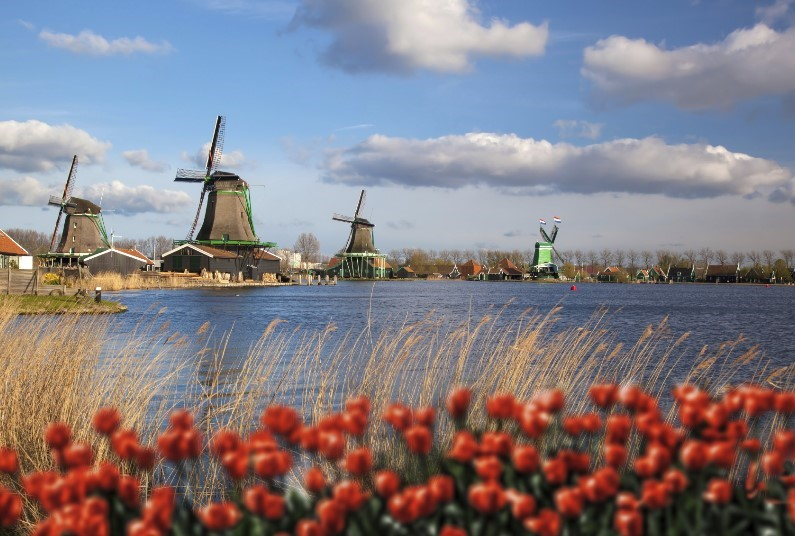 Windmills, Tulips and Belgian Delights